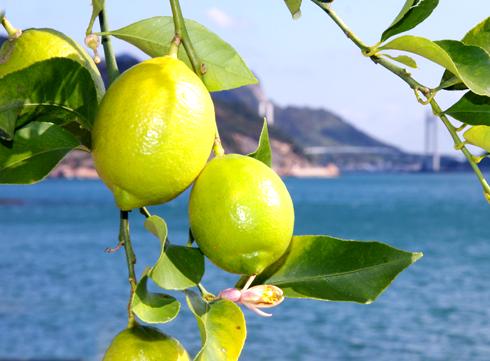 青いレモン